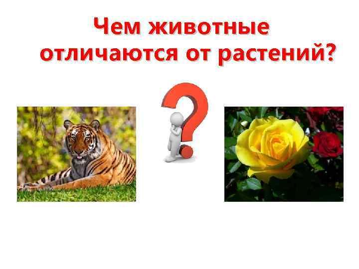 Чем животные отличаются от растений?