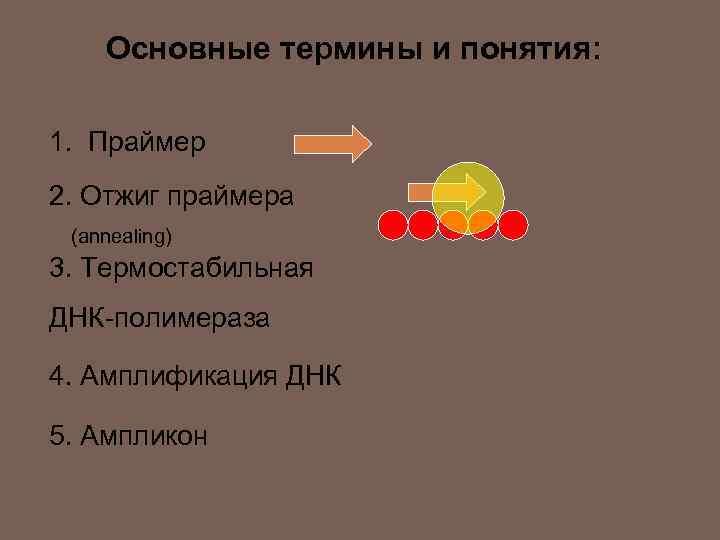 Основные термины и понятия: 1. Праймер 2. Отжиг праймера (annealing) 3. Термостабильная ДНК-полимераза 4.