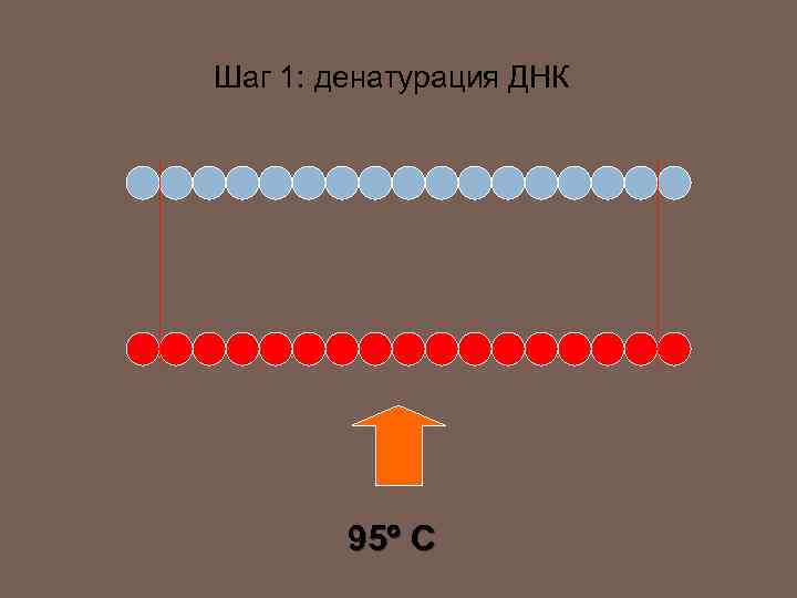 Шаг 1: денатурация ДНК 95 C