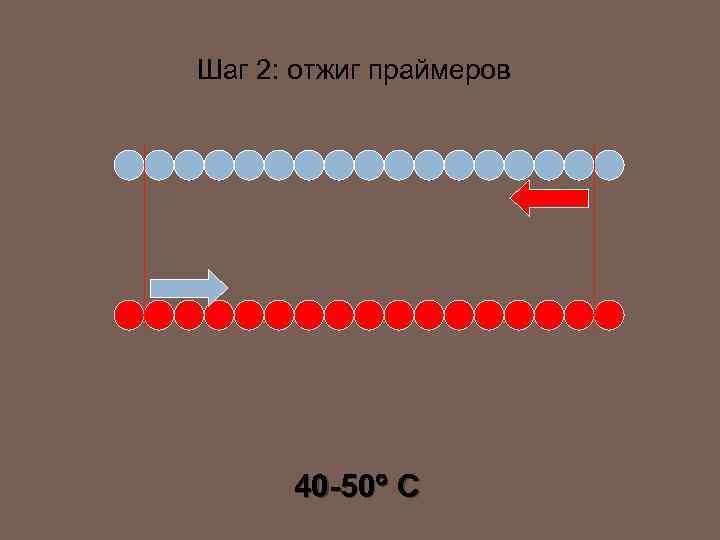 Шаг 2: отжиг праймеров 40 -50 C