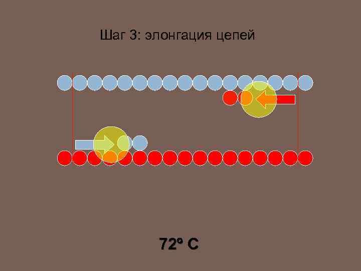 Шаг 3: элонгация цепей 72 C