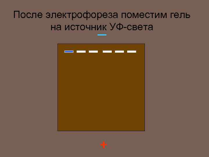 После электрофореза поместим гель на источник УФ-света — +