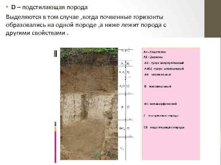 • D – подстилающая порода Выделяются в том случае , когда почвенные горизонты