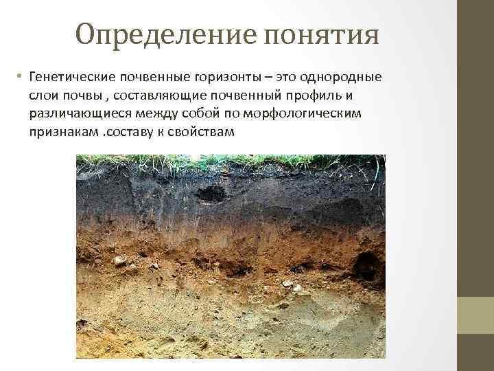 Определение понятия • Генетические почвенные горизонты – это однородные слои почвы , составляющие почвенный
