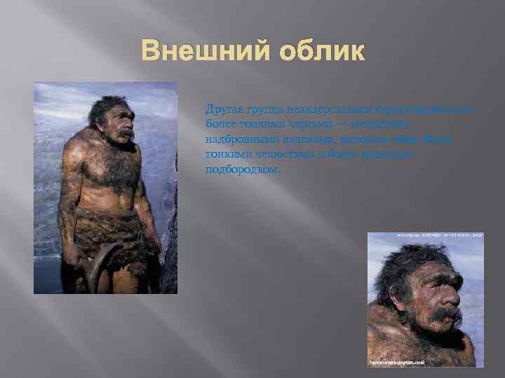 Внешний облик Другая группа неандертальцев характеризовалась более тонкими чертами — меньшими надбровными валиками, высоким