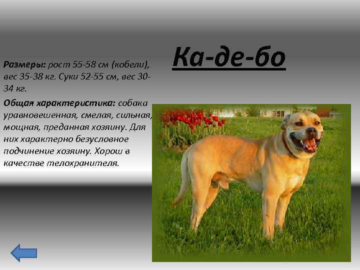 характеристика собак и картинки актер был