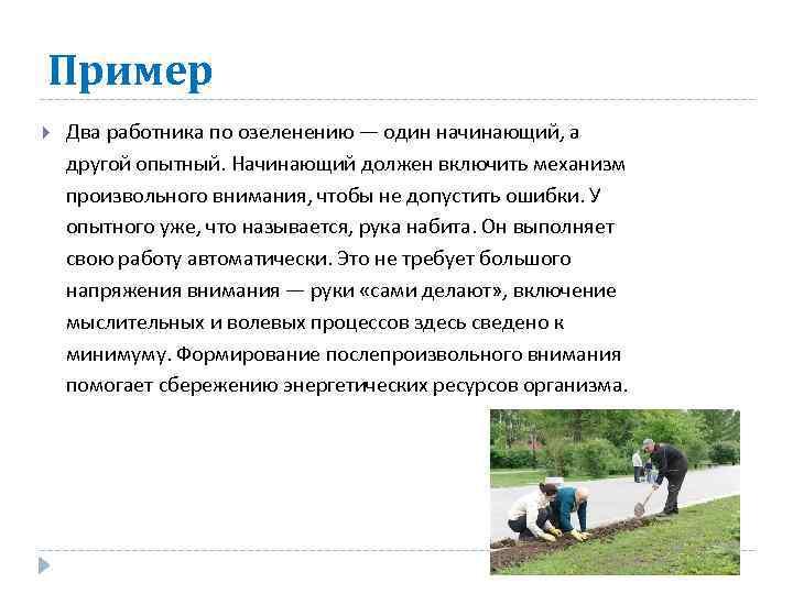 Пример Два работника по озеленению — один начинающий, а другой опытный. Начинающий должен включить
