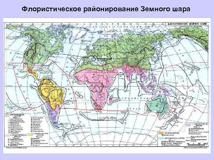 Флористическое районирование Земного шара