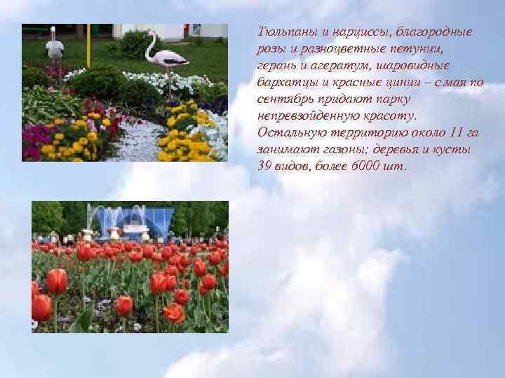 Тюльпаны и нарциссы, благородные розы и разноцветные петунии, герань и агератум, шаровидные бархатцы и