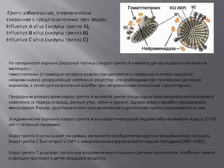 Грипп заболевание, этиологически связанное с представителями трех родов: Influenza A virus (вирусы гриппа А),