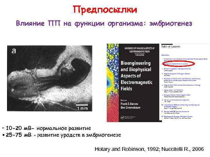 Предпосылки Влияние ПП на функции организма: эмбриогенез • 10 -20 м. В- нормальное развитие