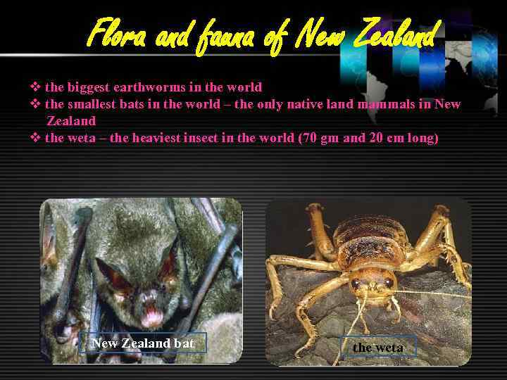 Flora and fauna of New Zealand v the biggest earthworms in the world v
