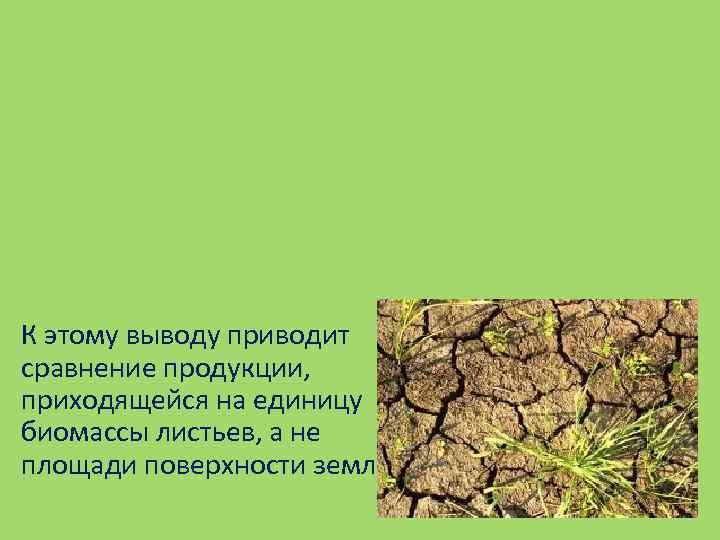 К этому выводу приводит сравнение продукции, приходящейся на единицу биомассы листьев, а не площади