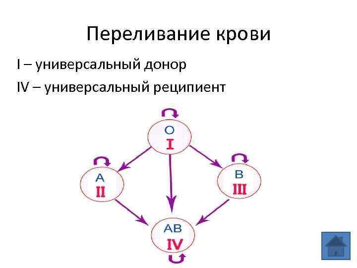 1 группа крови: совместимость с другими группами.