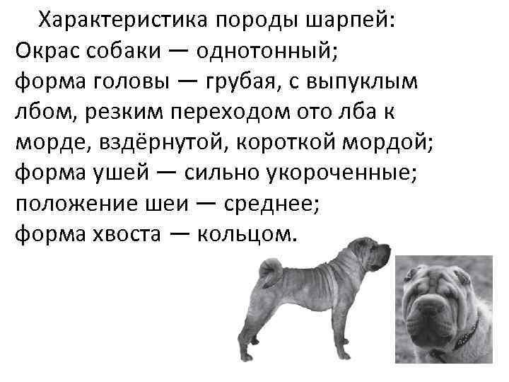 Характеристика породы шарпей: Окрас собаки — однотонный; форма головы — грубая, с выпуклым