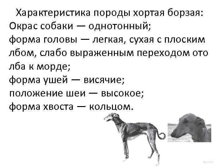 Характеристика породы хортая борзая: Окрас собаки — однотонный; форма головы — легкая, сухая