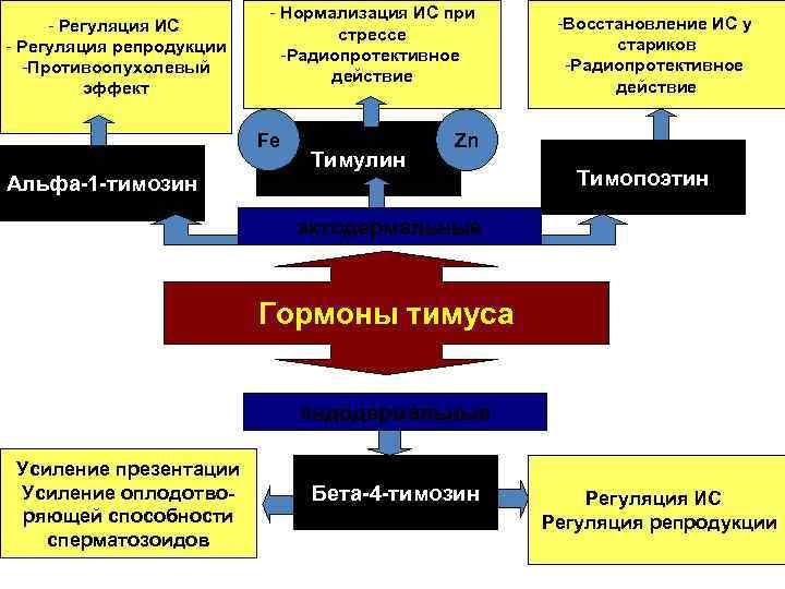 - Регуляция ИС - Регуляция репродукции -Противоопухолевый эффект - Нормализация ИС при стрессе -Радиопротективное