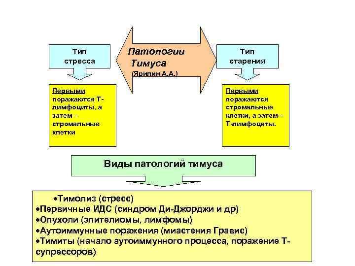 Тип стресса Патологии Тимуса Тип старения (Ярилин А. А. ) Первыми поражаются Тлимфоциты, а