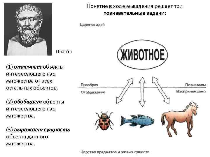 Понятие в ходе мышления решает три познавательные задачи: Платон (1) отличает объекты интересующего нас