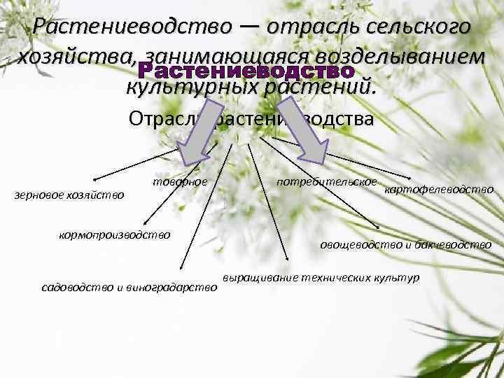 Отрасль сельского хозяйства которая занимается выращиванием полезных растений 41