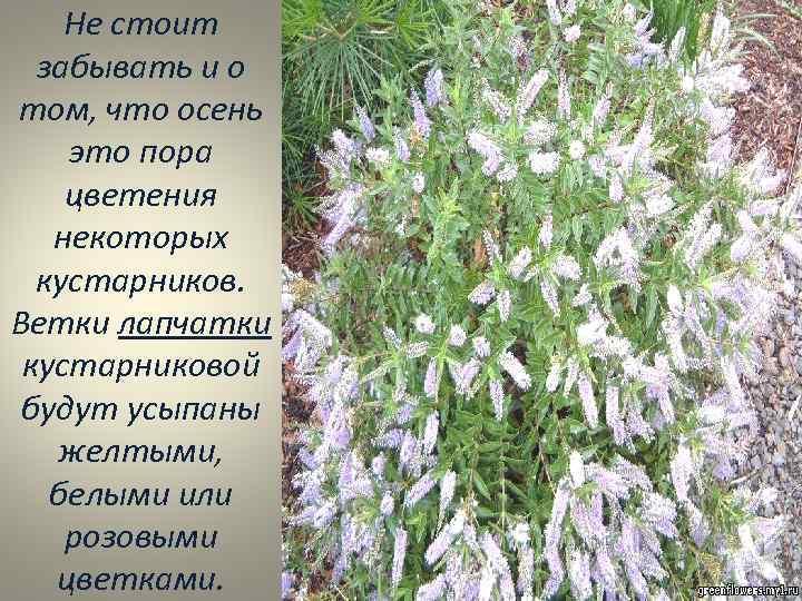 Не стоит забывать и о том, что осень это пора цветения некоторых кустарников. Ветки