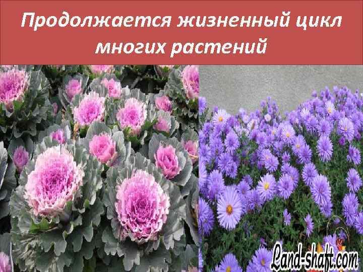Продолжается жизненный цикл многих растений