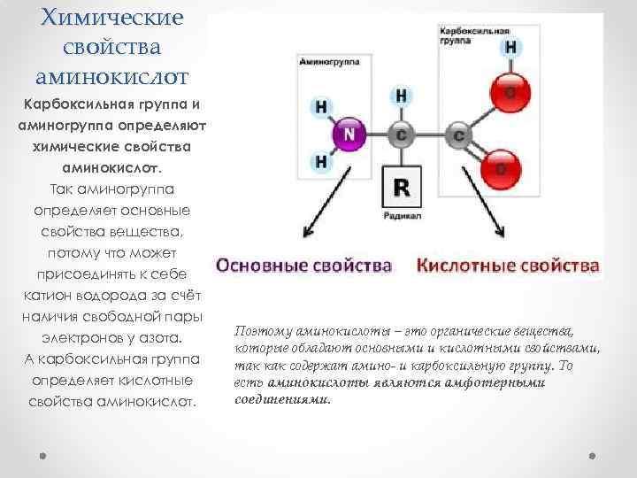 Химические свойства аминокислот Карбоксильная группа и аминогруппа определяют химические свойства аминокислот. Так аминогруппа определяет
