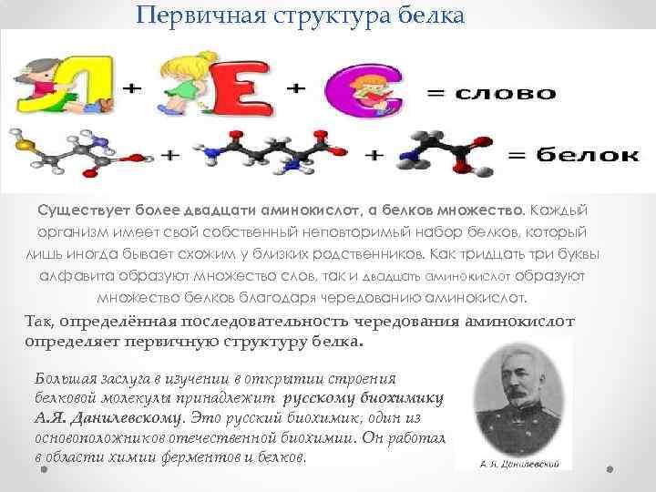 Первичная структура белка Существует более двадцати аминокислот, а белков множество. Каждый организм имеет свой