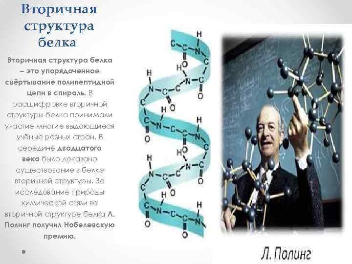 Вторичная структура белка – это упорядоченное свёртывание полипептидной цепи в спираль. В расшифровке вторичной