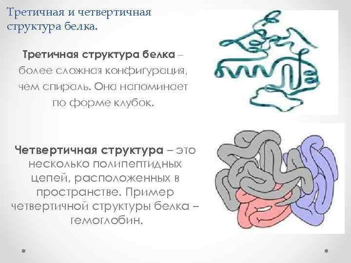 Третичная и четвертичная структура белка. Третичная структура белка – более сложная конфигурация, чем спираль.