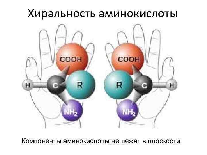 Хиральность аминокислоты Компоненты аминокислоты не лежат в плоскости