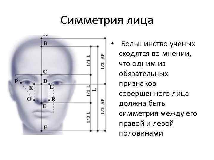 Симметрия лица • Большинство ученых сходятся во мнении, что одним из обязательных признаков совершенного