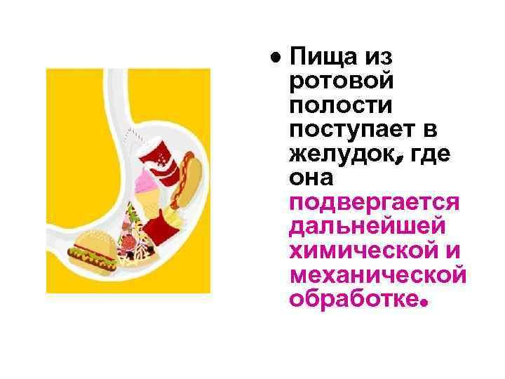 • Пища из ротовой полости поступает в желудок, где она подвергается дальнейшей химической