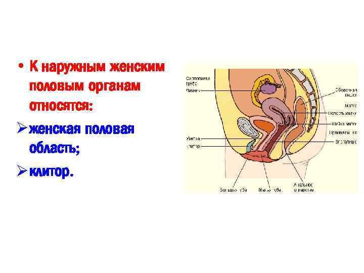 Как стимулировать гениталии мужчин, секс сперму в вагину