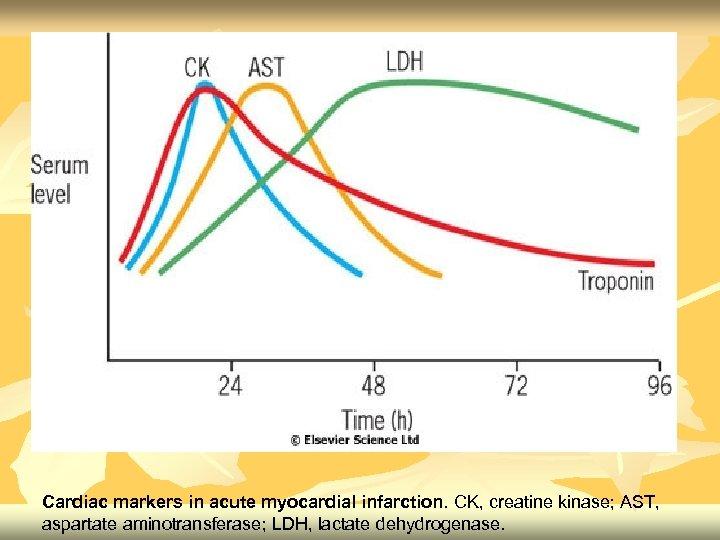 Cardiac markers in acute myocardial infarction. CK, creatine kinase; AST, aspartate aminotransferase; LDH, lactate