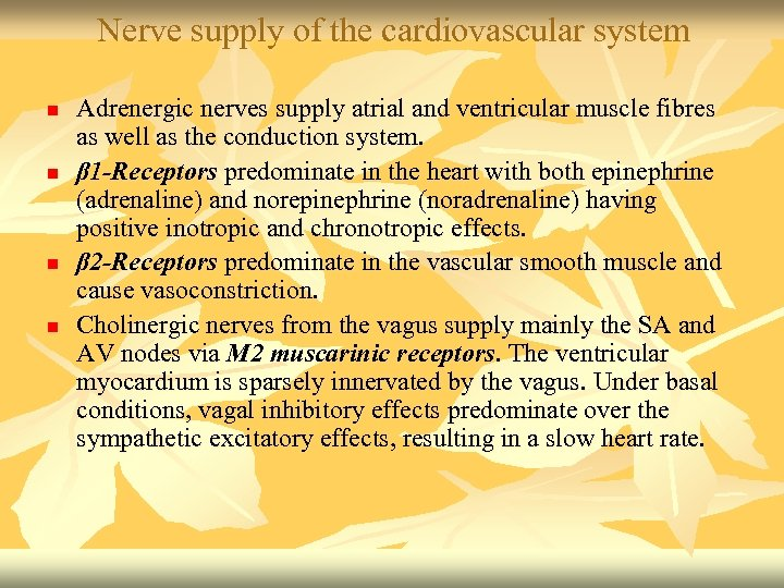 Nerve supply of the cardiovascular system n n Adrenergic nerves supply atrial and ventricular
