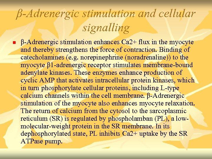 β-Adrenergic stimulation and cellular signalling n β-Adrenergic stimulation enhances Ca 2+ flux in the