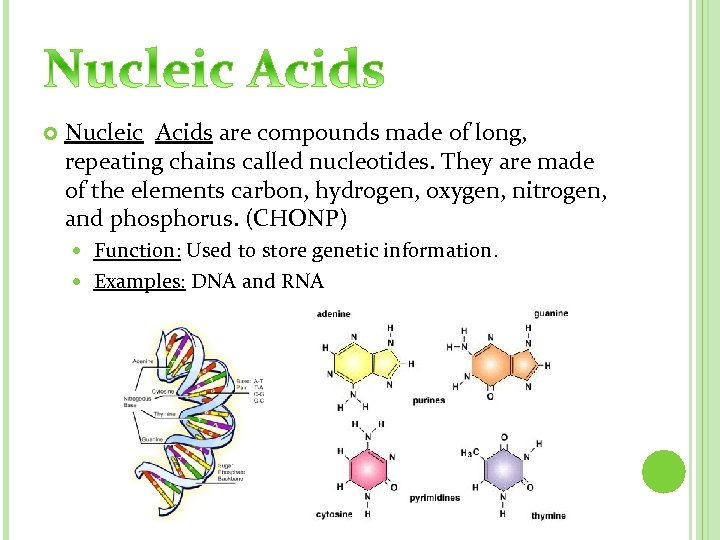 Nucleic Acids are compounds made of long, repeating chains called nucleotides. They are
