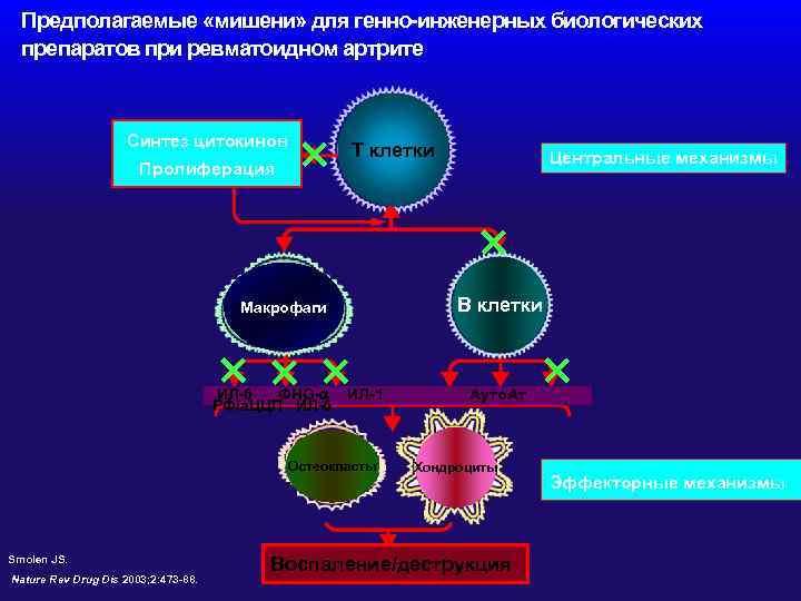 Предполагаемые «мишени» для генно-инженерных биологических препаратов при ревматоидном артрите Синтез цитокинов Пролиферация ×