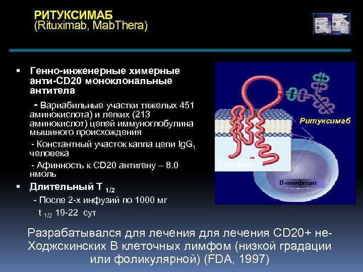 РИТУКСИМАБ (Rituximab, Mab. Thera) Генно-инженерные химерные анти-CD 20 моноклональные антитела - Вариабильные участки тяжелых