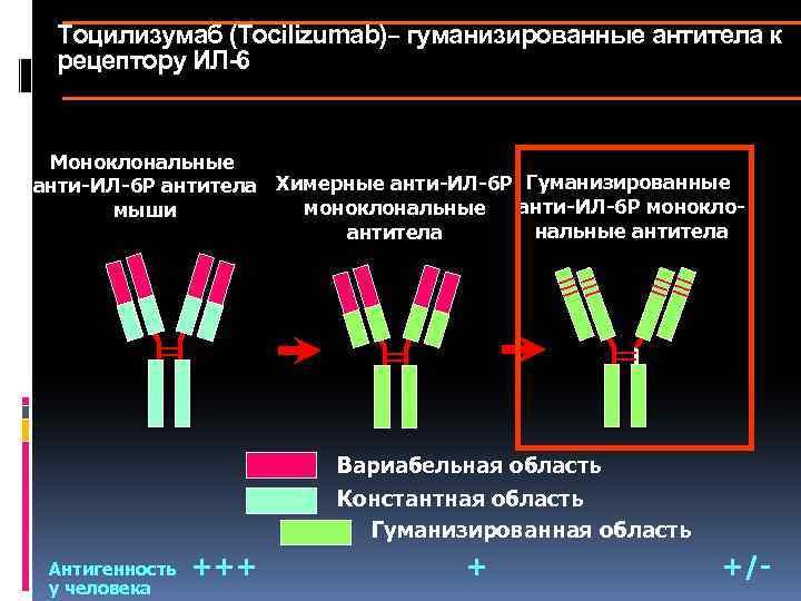 Тоцилизумаб (Tocilizumab)– гуманизированные антитела к рецептору ИЛ-6 Моноклональные анти-ИЛ-6 Р антитела Химерные анти-ИЛ-6 Р