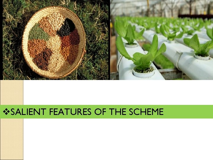 v. SALIENT FEATURES OF THE SCHEME