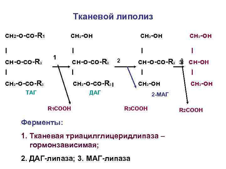 Тканевой липолиз сн 2 -о-со-R 1 сн 2 -он I cн-о-со-R 2 I cн