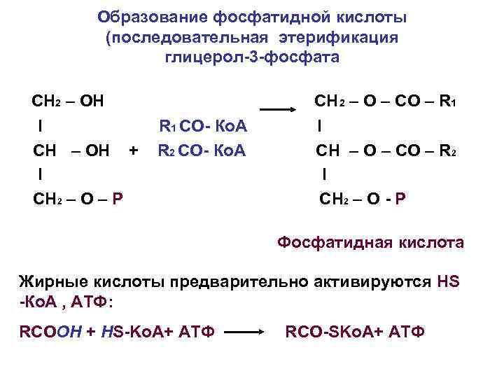 Образование фосфатидной кислоты (последовательная этерификация глицерол-3 -фосфата СН 2 – ОН I СН –