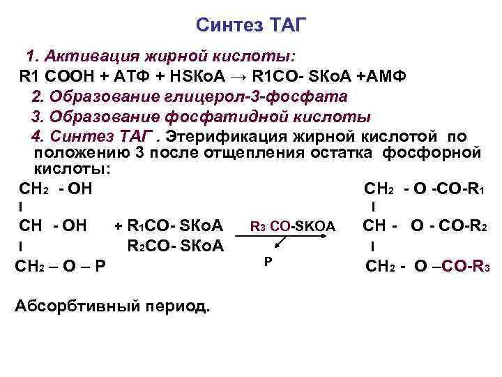 Синтез ТАГ 1. Активация жирной кислоты: R 1 СООН + АТФ + НSКо. А