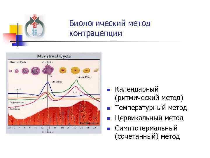 Биологический метод контрацепции n n Календарный (ритмический метод) Температурный метод Цервикальный метод Симптотермальный (сочетанный)