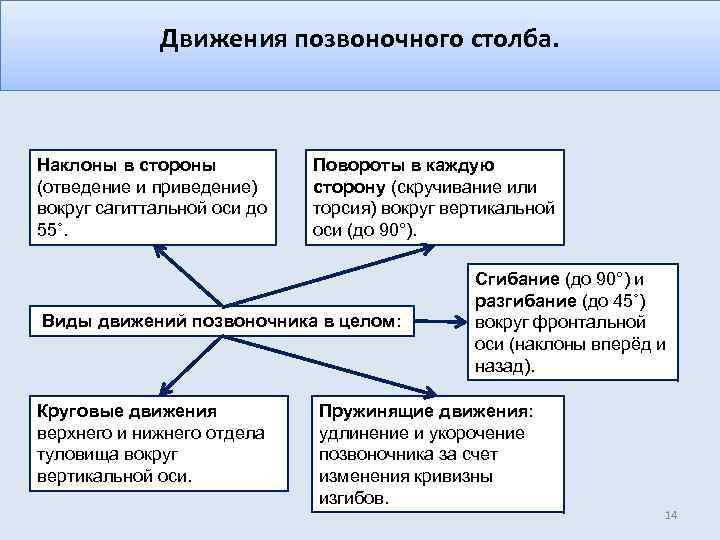 Движения позвоночного столба. Наклоны в стороны (отведение и приведение) вокруг сагиттальной оси до 55˚.