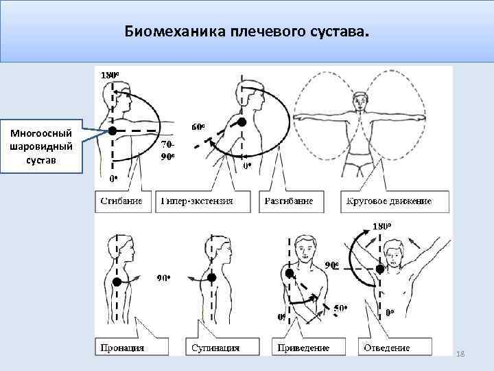 Биомеханика плечевого сустава. Многоосный шаровидный сустав 18