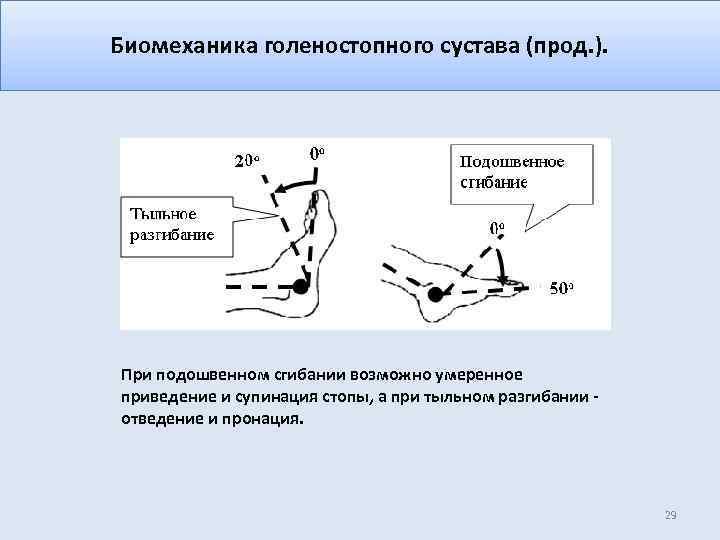 Биомеханика голеностопного сустава (прод. ). При подошвенном сгибании возможно умеренное приведение и супинация стопы,