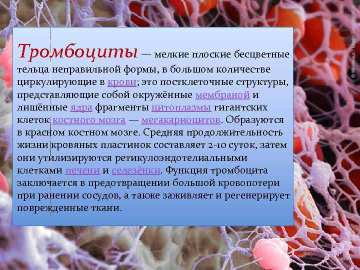 Тромбоциты — мелкие плоские бесцветные тельца неправильной формы, в большом количестве циркулирующие в крови;